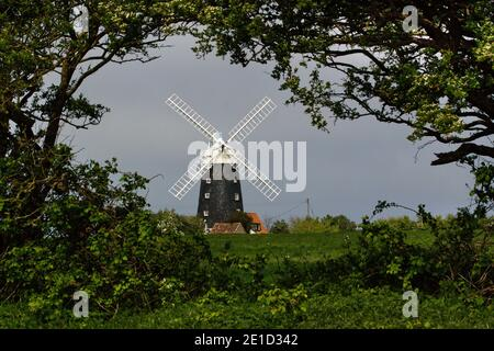 Burnham Overy Staithe Windmill viewed through trees, Norfolk, England. - Stock Photo