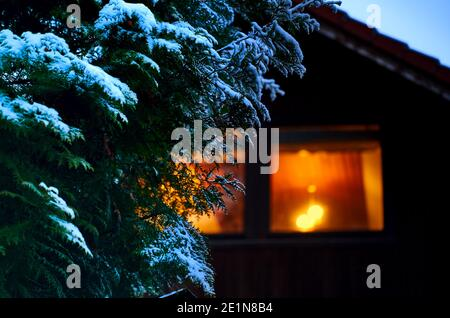 Conifer covered with a little snow in front of the intentionally blurred single-family house with warmly lit first-floor window.