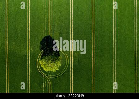 wonderful view from above on lonely tree in a green field, perfect afternoon light, shadows and colors