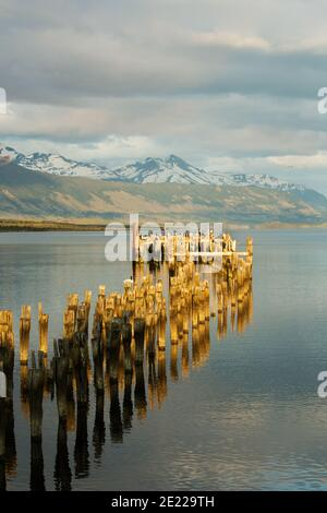 Old wooden jetty reflected in waters of the Ultima Esperanze Sound / Golfo Almirante Montt Puerto Natales, Patagonia, Chile, Andes & Torres del Paine