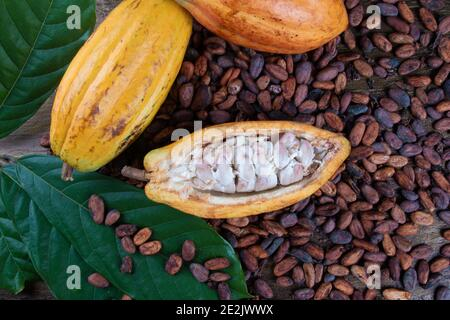 Detail of cut cocoa fruits and raw cocoa beans.