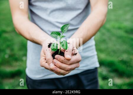 Close up man holding young plant in hands against spring green background. Ecology and spring garden concept