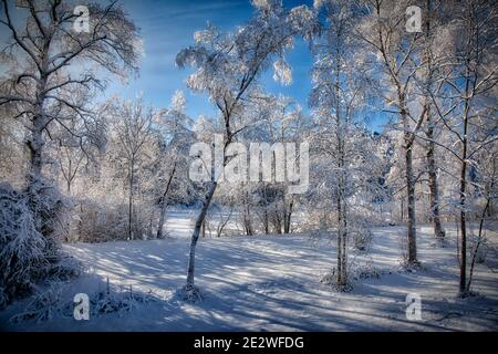 DE - BAVARIA: Sunny winter scene near Bad Tölz in the Isar Valley