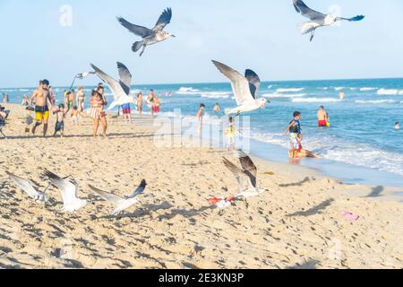 Miami, Florida - January 1, 2021: A Flock of Seaguls Flying Over The Beaches of Miami Florida.