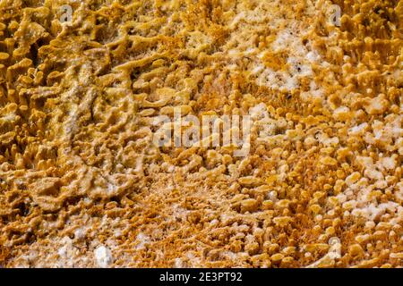 North America, Wyoming, Yellowstone National Park, Black Sand Basin. Detail of colorful thermophile bacteria mat.