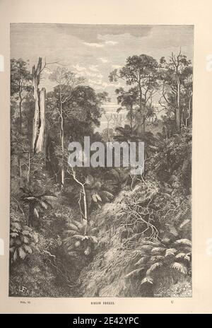 """VIRGIN FOREST Image taken from page 313 of 'Wanderings in every Clime; or, voyages, travels, and adventures all round the world ... A sequel to """"The Earth delineated with pen and pencil"""" ... With ... illustrations, etc' Stock Photo"""