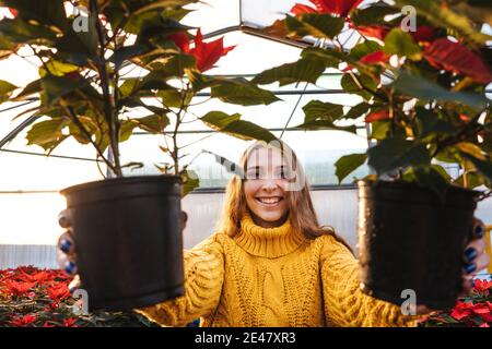 Woman in greenhouse in yellow sweater hold poinsettia in pots and smile.