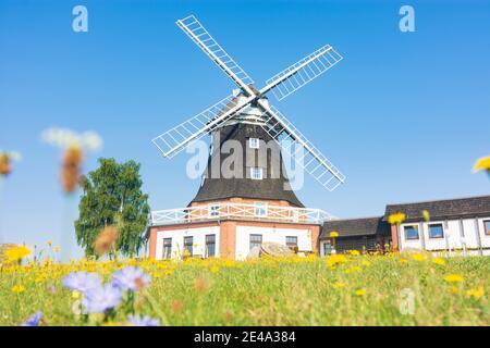 Klütz, wind mill in Klütz, Ostsee (Baltic Sea), Mecklenburg-Vorpommern / Mecklenburg-Western Pomerania, Germany Stock Photo