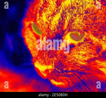 Cat sits on pavement in scientific high-tech thermal imager on night background
