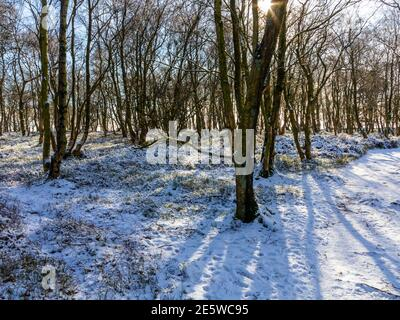 Winter view with silver birch trees at Stanton Moor near Bakewell in the Peak District National Park Derbyshire England UK - Stock Photo