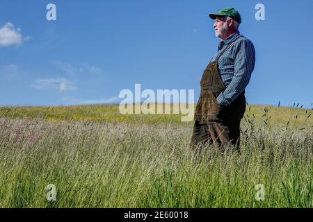 A farmer stands on his organic meadow, which he only mows twice a year.