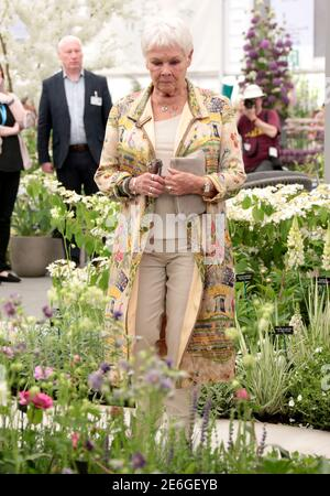 May 20, 2019 - London, England, UK - 2019 RHS Chelsea Flower Show Press Day, Royal Hospital, Chelsea Photo Shows: Dame Judi Dench - Stock Photo