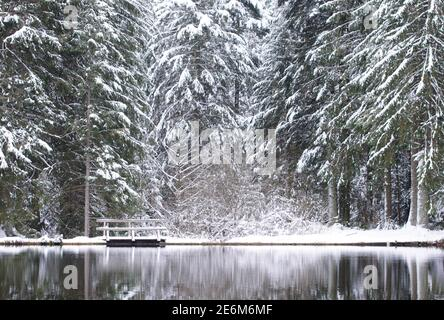 winter wonderland in coniferous forest - lake with small wooden bridge and snow on fir trees - Stock Photo