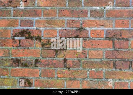Old red brick wall covered with green moss. Vintage stone background. - Stock Photo