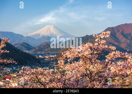 Otsuki, Japan cityscape with Mt. Fuji in spring season with cherry blossoms.
