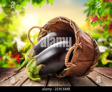 Fresh eggplants in a basket on a wooden table, a crop of vegetables. - Stock Photo