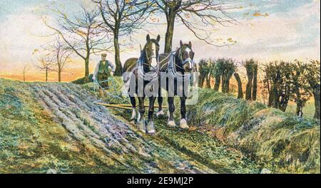 Ploughing in the Rural Life series of postcards produced by Raphael Tuck in the early 20th century. - Stock Photo