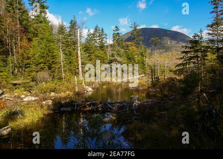 Beaver dam near Lonesome Lake and Cannon Mountain in the background at ew Hampshire