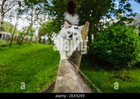 Cat walking on fence in summer Stock Photo