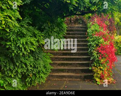 Europe, Germany, Hesse, Marburg, botanical garden of the Philipps University on the Lahnberge, wild wine in autumn leaves, ivy tendrils, stone stairs