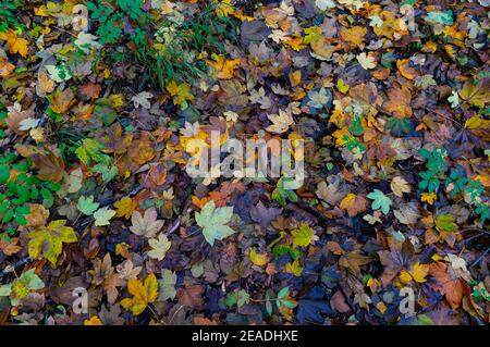 Autumn leaves in Germany colourful leaves on the ground with mushrooms