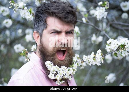 Spring man in cherry blossom. Screaming bearded brutal man and looking at the camera, goal, winner, celebrating. Face expression. Crazy man with beard