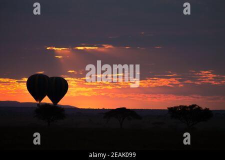 Dawn at Serengeti National Park, Tanzania, Africa