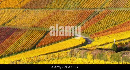 Vineyards wine autumn fall season colorful leaves nature panoramic view