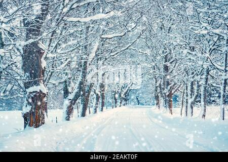 Beautiful snowy alley in the beginning of winter - Stock Photo