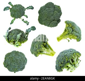 collection of fresh green Broccoli isolated - Stock Photo