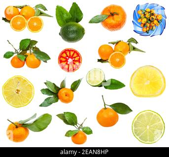 set of various citrus fruits isolated on white
