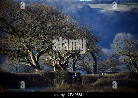 Runner on deserted country lane with overhanging trees and winter light on woodland shadow