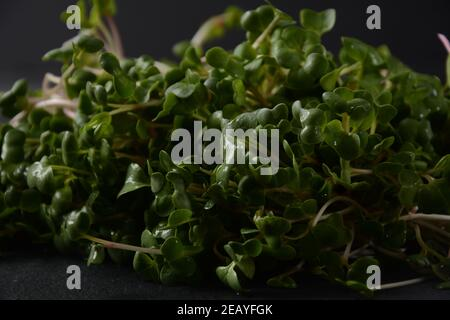 Radish Sprouts in wooden bowl. Japanese or oriental radish and true daikon. - Stock Photo