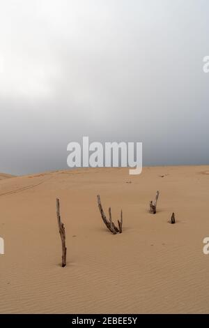 wild desert landscape and large sand dune with under an overcast evening sky with dead trees in the foreground