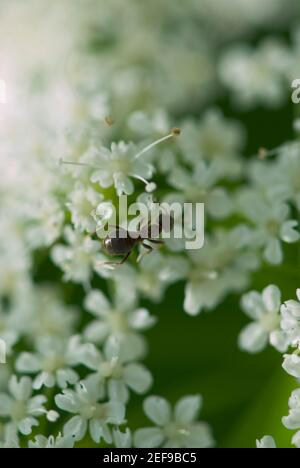 High angle view of an ant on flowers