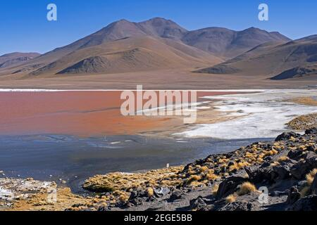 Laguna Colorada / Red Lagoon, salt lake in the Eduardo Avaroa Andean Fauna National Reserve in the Andean mountains, Potosí Province, Bolivia