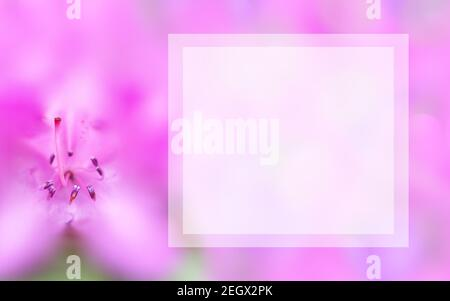 Template with flower and light square text box. Background with macro pink azalea. Mock up spring, summer concept. Elegant, gentle, romantic image