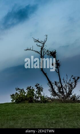 An old dry tree on top of a hill.