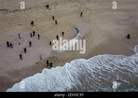 Nitzanim Reserve, Israel. 19th Feb, 2021. An aerial view of a dead fin whale calf washed up on a beach south of Tel Aviv. According to Israeli officials, it wasn't clear what caused the death. Credit: Oren Ziv/dpa/Alamy Live News