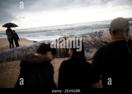 Nitzanim Reserve, Israel. 19th Feb, 2021. People observe a dead fin whale calf that washed up on a beach south of Tel Aviv. According to Israeli officials, it wasn't clear what caused the death. Credit: Ilia Yefimovich/dpa/Alamy Live News