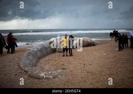 Nitzanim Reserve, Israel. 19th Feb, 2021. People gather around a dead fin whale calf that washed up on a beach south of Tel Aviv. According to Israeli officials, it wasn't clear what caused the death. Credit: Ilia Yefimovich/dpa/Alamy Live News