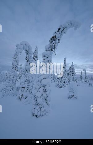Wintery landscape in Pallas-Yllästunturi National Park, Muonio, Lapland, Finland