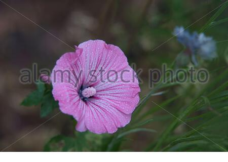 a beautiful flower in the garden - Stock Photo