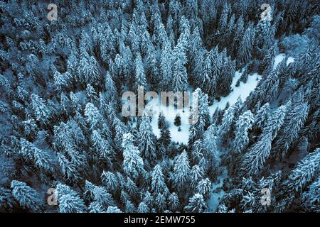 Aerial drone top down fly over winter spruce and pine forest. Fir trees in mountains valley covered with snow. Landscape photography