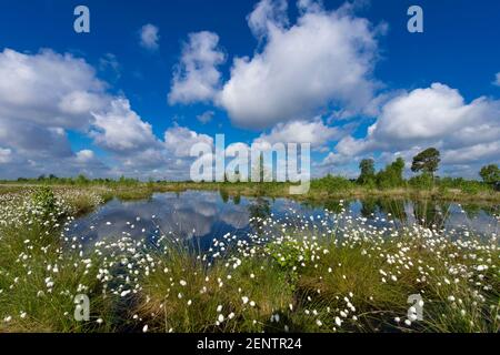 Fruehling im Moor bei Goldenstedt, Niedersachsen, Stock Photo