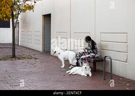 Young woman sitting with two Siberian huskies. - Stock Photo