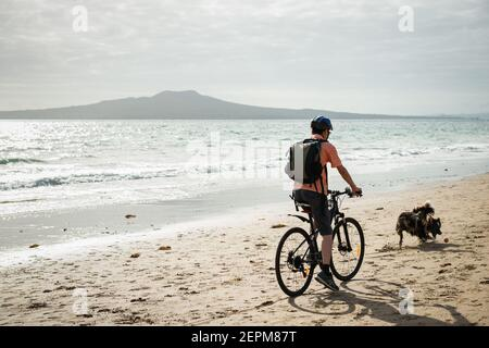 A man cycling on the Milford beach with Rangitoto Island in the distance. A dog chasing the ball suddenly running in front of the cyclist.