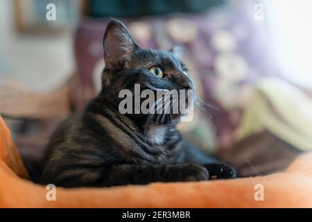 black cat with green eyes lying on an orange blanket, looks at the camera. close up