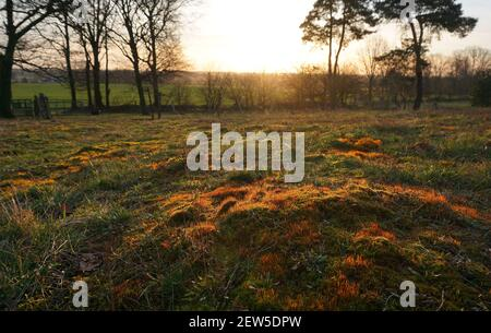 Sunrise in the field. The rising sun casts a golden glow on the moss in this hilly meadow Stock Photo