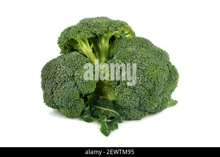 group of very fresh green broccoli with drops of water, isolated on white background. Vegetables background with copy space. Food. - Stock Photo